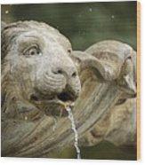 Fountain Detail Wood Print
