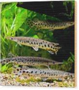Four Aquarium Fishes In Zoo Wood Print