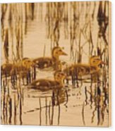 Four Baby Duckies Wood Print