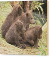 Four Bear Cubs Looking In Same Direction Wood Print