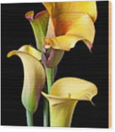 Four Calla Lilies Wood Print