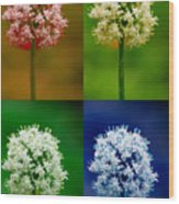 Four Colorful Onion Flower Power Wood Print