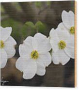 Four Dogwoods Wood Print