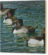 Four Ducks In A Row Wood Print