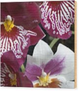 Four Exotic Orchid Blossoms Wood Print