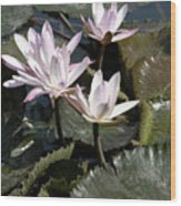 Four Lilies In The Sunlight Wood Print