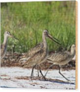 Four Marbled Godwits Wood Print