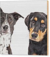 Four Mixed Breed Dogs Closeup Wood Print