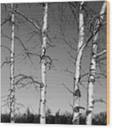 Four Naked Birches Bw Wood Print