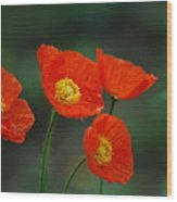 Four Poppies Wood Print