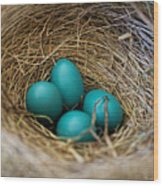 Four Robin Eggs In Nest Wood Print
