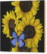 Four Sunflowers And Blue Butterfly Wood Print