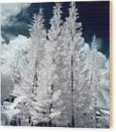 Four Tropical Pines Infrared Wood Print