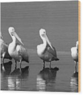 Four White Pelicans In A Funny Pose Wood Print