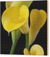 Four Yellow Calla Lilies Wood Print