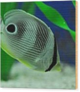 Foureye Butterfly Fish Wood Print