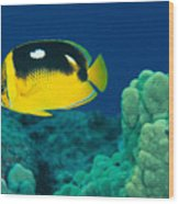 Fourspot Butterflyfish Wood Print