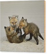 Fox Cubs At Play Wood Print