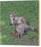 Fox Cubs Chilling Out Wood Print