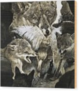 Fox Delivering Food To Its Cubs  Wood Print