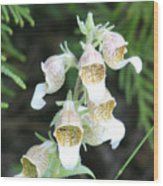 Fox Glove Wood Print