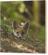 Fox Hole Wood Print