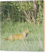 Fox In Meadow Wood Print