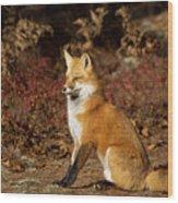 Fox In The Fall Wood Print