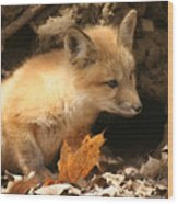 Fox Kit At Entrance To Den Wood Print