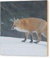 Fox On The Prowl Wood Print