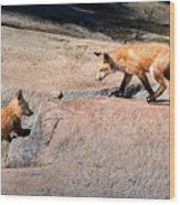 Red Fox Playtime Wood Print