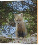 Fox Pup112 Wood Print