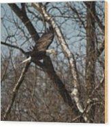 Fox River Eagles - 20 Wood Print