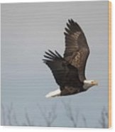 Fox River Eagles - 24 Wood Print