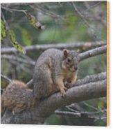 Fox Squirrel On A Branch  Wood Print