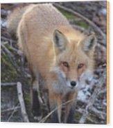 Fox Stare Wood Print