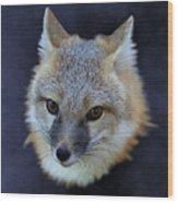 Foxburst Wood Print