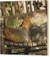 Foxes In A Chair Wood Print