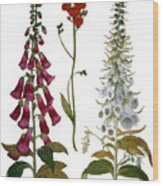 Foxglove And Hawkweed Wood Print
