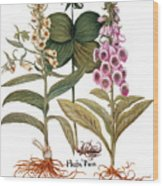 Foxglove And Herb Paris Wood Print