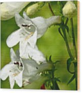 Foxglove Beardtongue - Penstemon Digitalis Wood Print