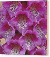 Foxglove Wood Print by Diane E Berry