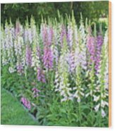 Foxglove Garden Wood Print