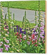 Foxglove In Front Of Conservatory In Golden Gate Park In San Francisco, California  Wood Print