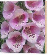 Foxglove Plant - Pink Bell Flowers. Macro Wood Print