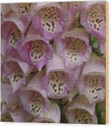 Foxglove Upclose Wood Print