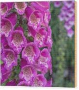 Foxgloves 1 Wood Print