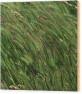 Foxtail Barley - Salisbury Potrero Wood Print