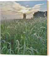 Foxtail Grasses In Glacial Park Wood Print