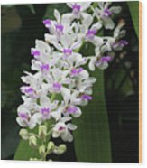 Foxtail Orchid Wood Print